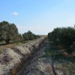 Channel allowing fertiliser and pesticide run-off into Akrotiri Lake