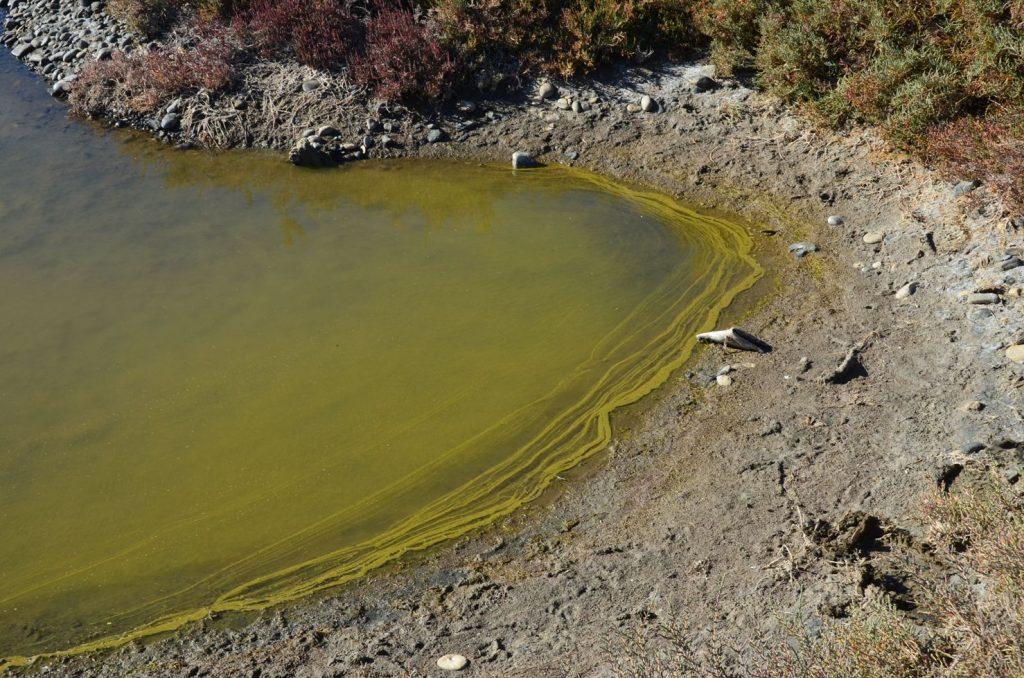 eutrophic lagoon aphanius habitat