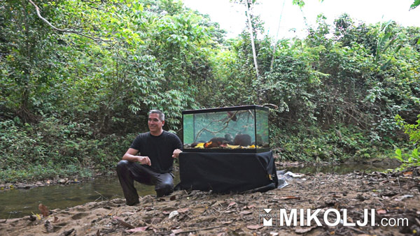 Ivan Mikolji River Explorer and Audio Visual Artist sets up a wild aquarium 6.  www.mikolji.com